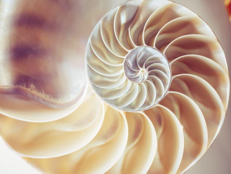 Sección de la simetría del nautilus de la estructura de la perla dentro de la textura del fondo de la naturaleza del modelo imágenes de archivo libres de regalías
