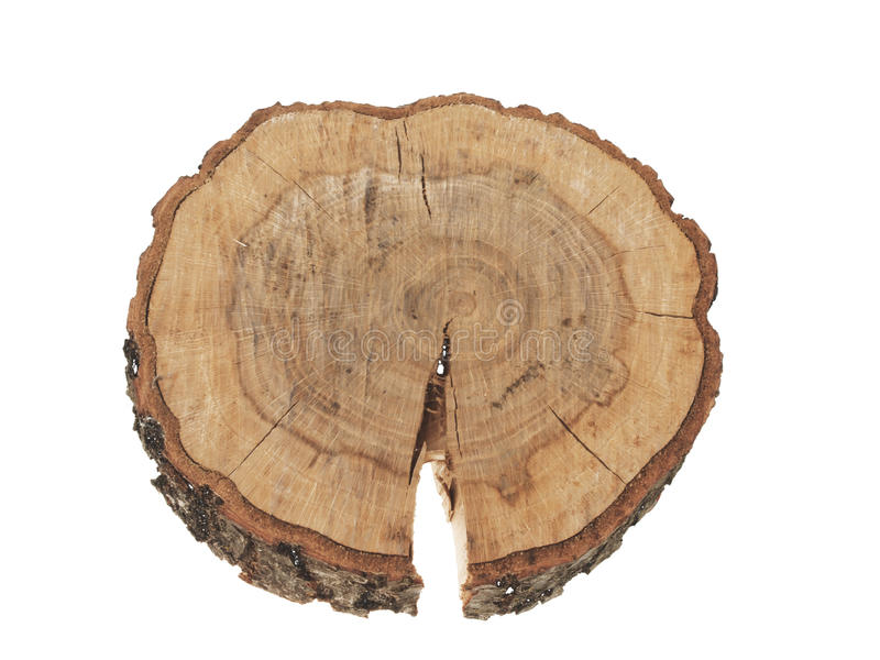 Sección representativa de los anillos del tronco de árbol aislados foto de archivo libre de regalías