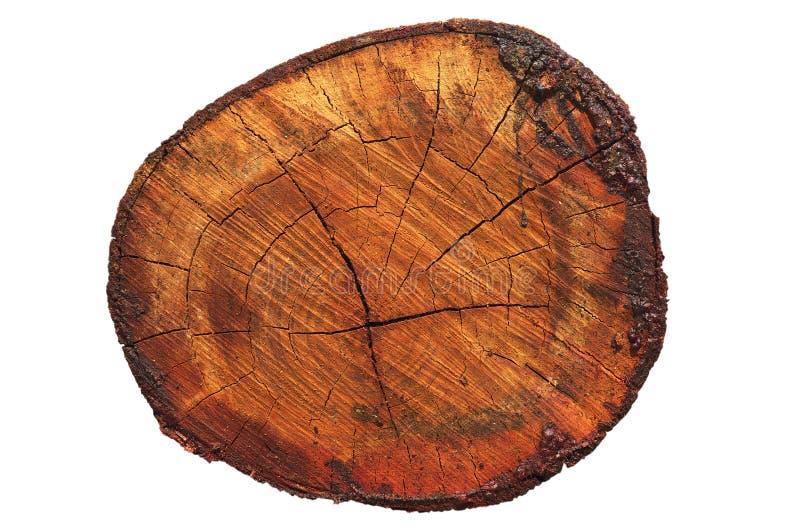 Sección representativa de madera foto de archivo