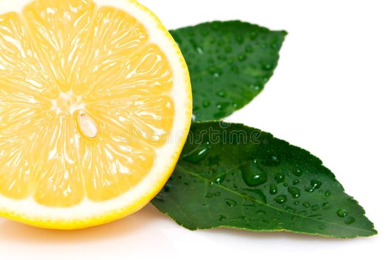 Sección representativa del limón maduro imagen de archivo