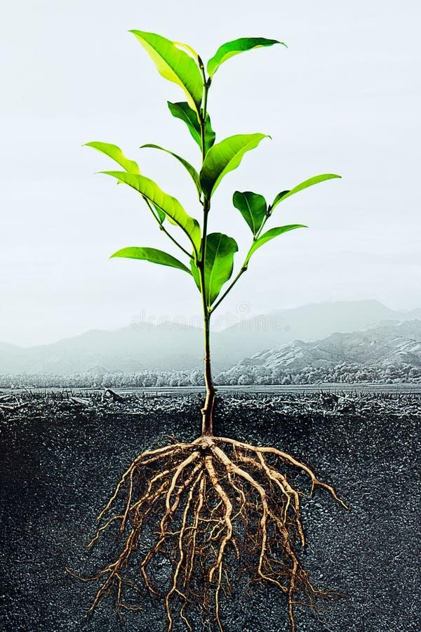 Sección representativa del suelo con una planta verde foto de archivo