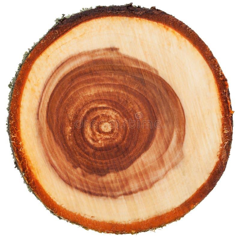 Sección representativa del tronco de árbol imagenes de archivo