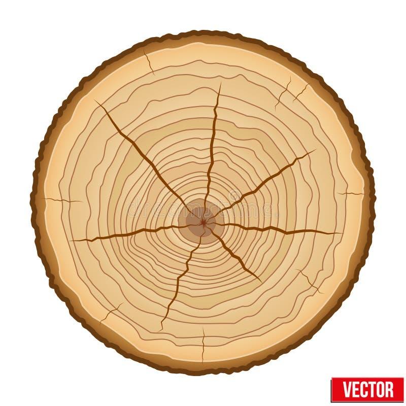 Sección representativa del tronco de árbol Vector ilustración del vector