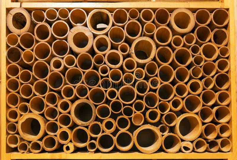 Secciones de los bastones de bambú - fondo imagen de archivo libre de regalías