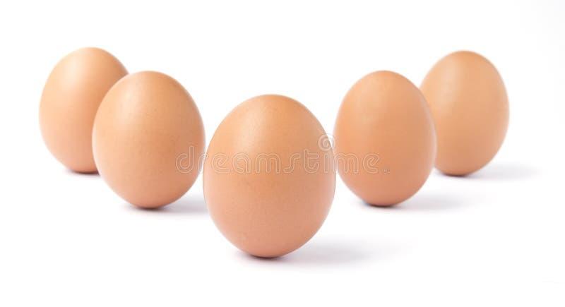 Sechs aufrechte braune Hühnereien lokalisiert gegen Weiß stockfoto