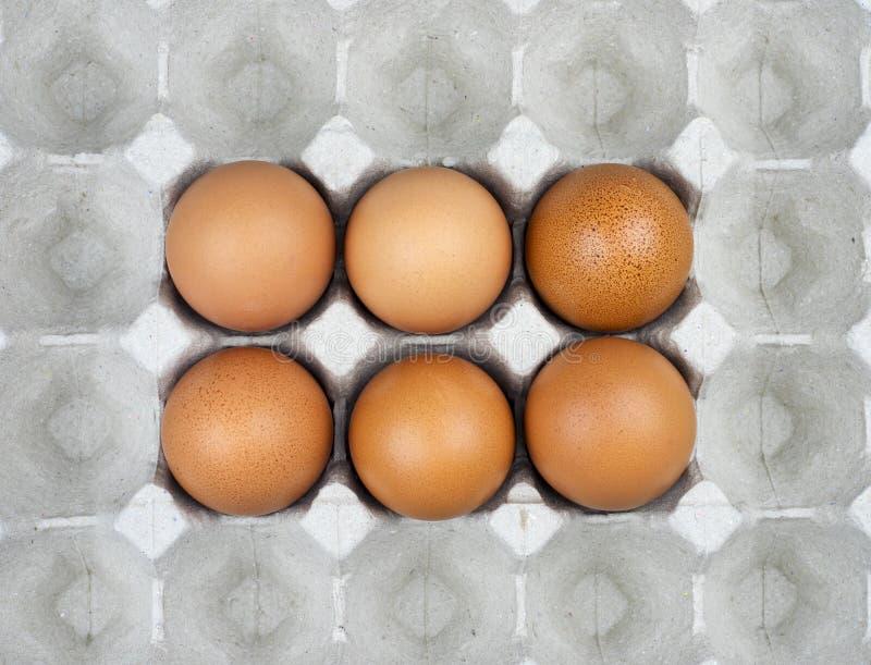 Sechs Eier im Papierbehälter lizenzfreie stockfotos