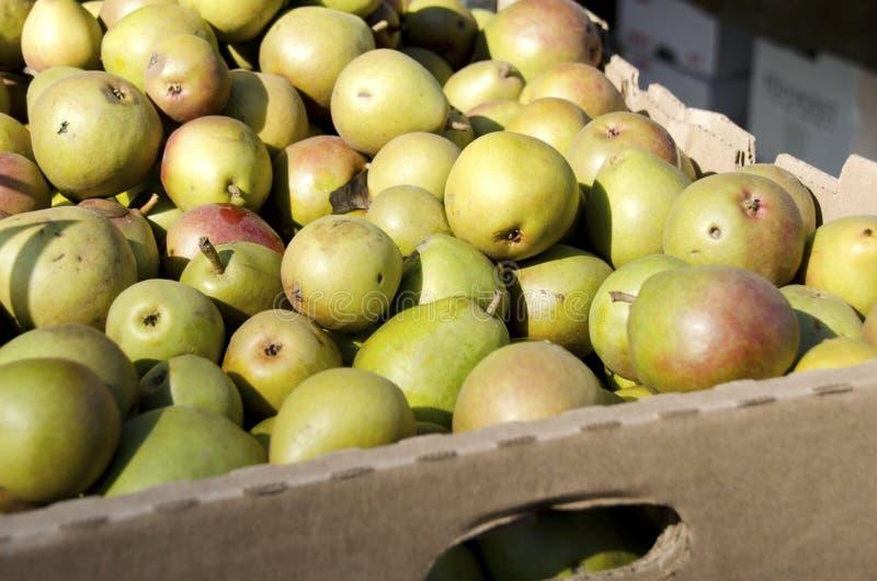 Seckel päron arkivbilder