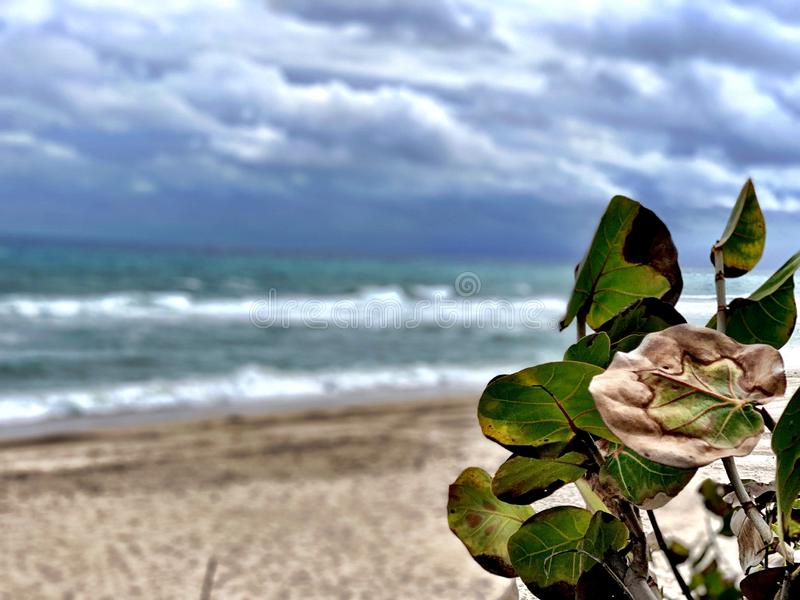 Secluded Beach. In Gulf Stream near Delray Beach, Florida royalty free stock photography