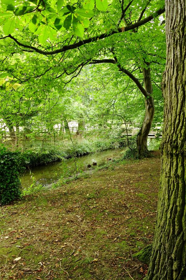 Secluded Forest Glen. Tall leafy green trees lit by filtered light form a canopy over a narrow river in a secluded area of a forest royalty free stock images