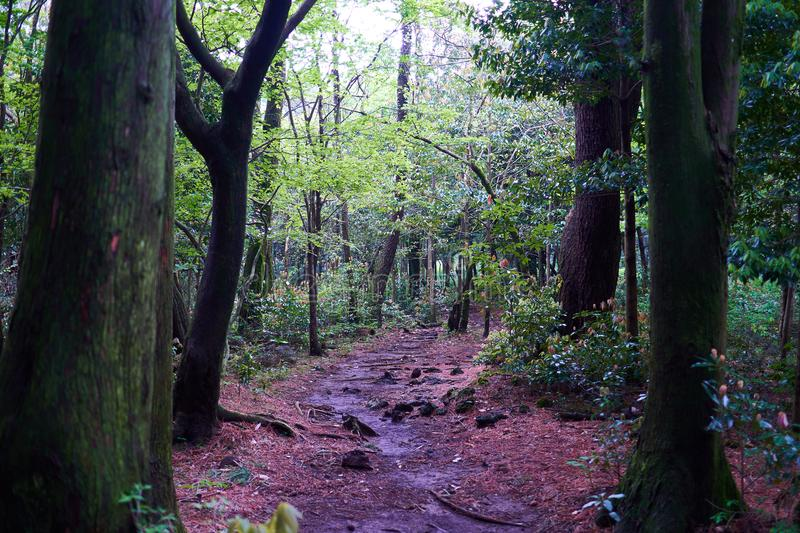 A secluded pathway in Saryuni Forest, Jeju Island, South Korea. A fairytale-like secluded pathway in Saryuni Forest, Jeju Island, South Korea stock photo