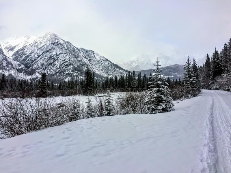 A secluded and scenic cross country skiing trail outside of Banff, Alberta, Canada. The trail goes along the Bow River with the R stock images
