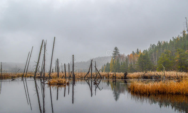 Secluded wood heaven. Secluded beaver pond in the middle of the wood on a rainy and foggy fall day, golden straw surrounding the pond at the foot of the mountain royalty free stock photography