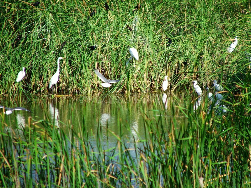 Seclusion. Birds in secluded Texas coastal pool royalty free stock photo