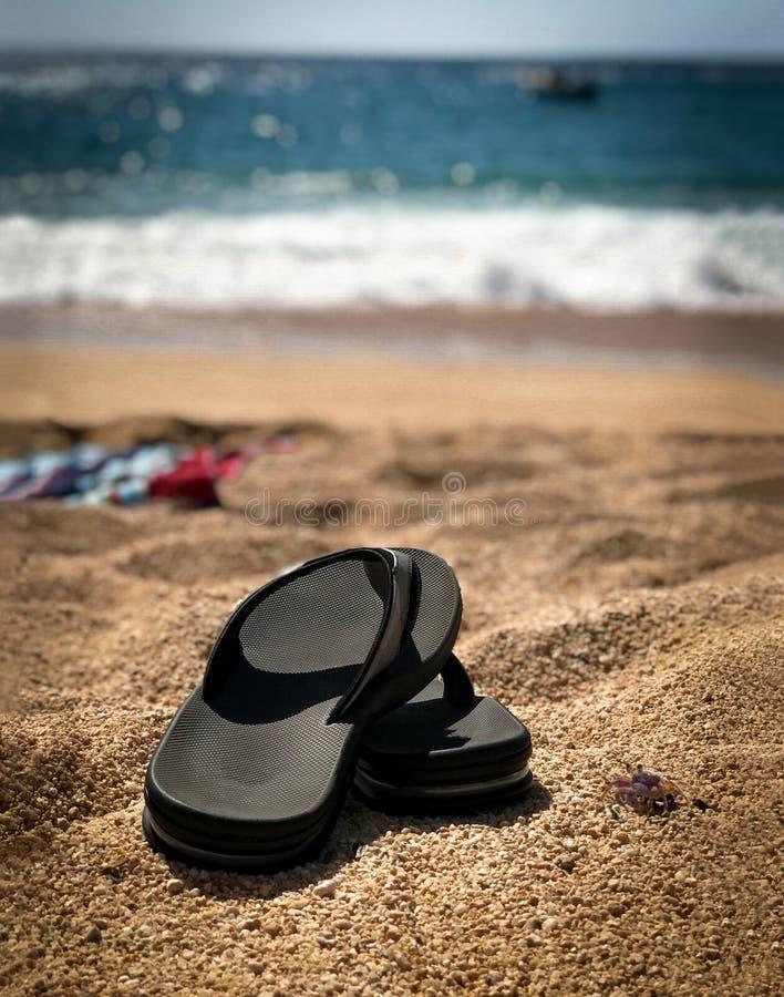 Secousses de plage avec M. Crabe images libres de droits
