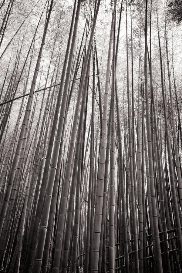 Secret Bamboo Forest of Fushimi Inari Shrine. The secret bamboo forest of Fushimi Inari Shrine on a warm spring day near Kyoto Japan stock photography