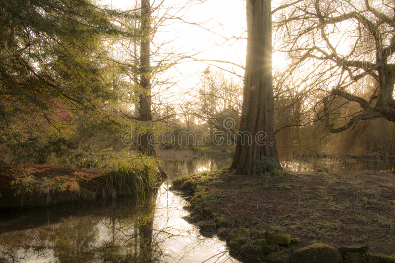 Download Secret forest stock photo. Image of glow, water, woodland - 39506824