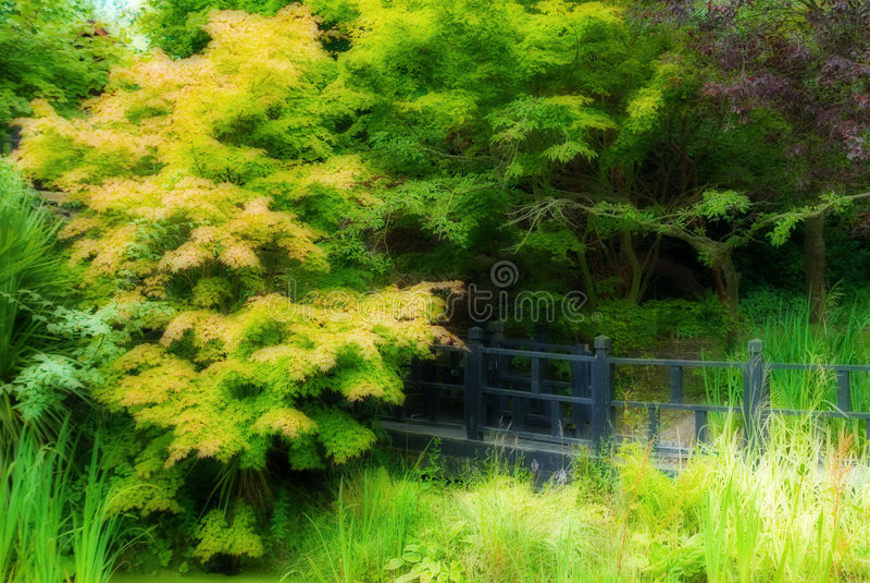 Download Secret Garden stock photo. Image of reeds, wooden, boardwalk - 5890864