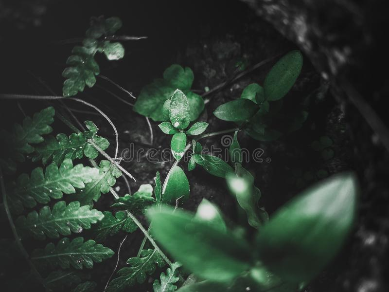 Secret Little plant royalty free stock photography