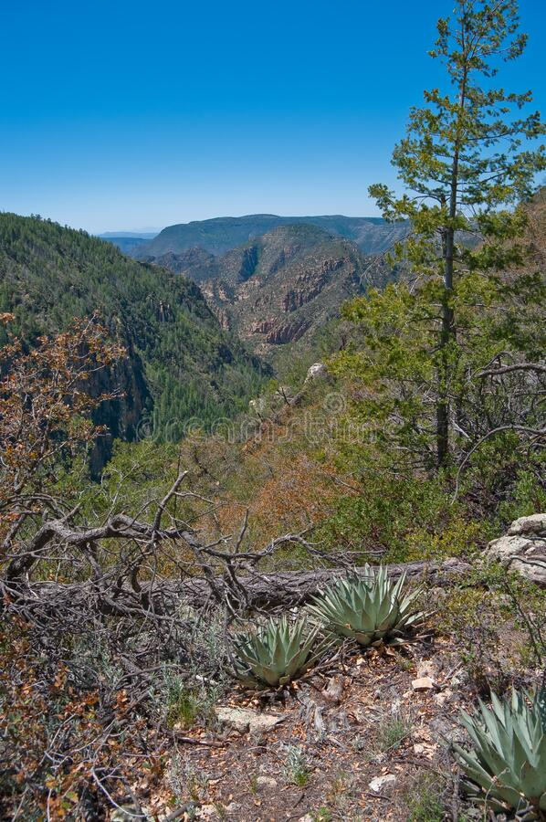 Secret Mountain Trail royalty free stock photos