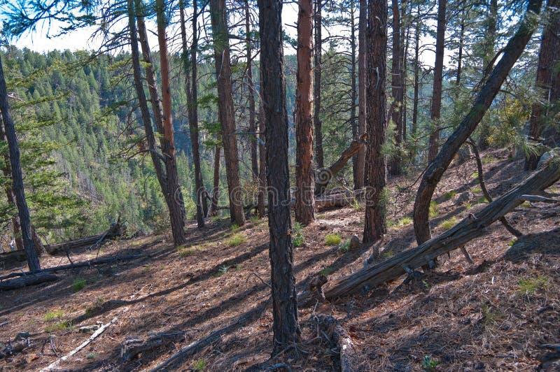 Secret Mountain Trail royalty free stock photography