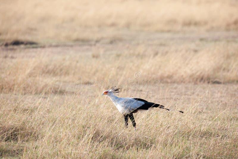 Secretaria Bird imagen de archivo