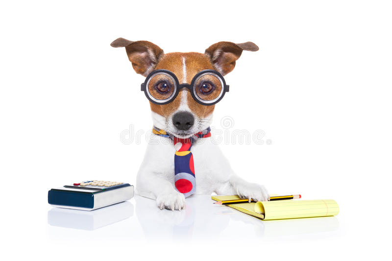 Secretary accountant dog stock image