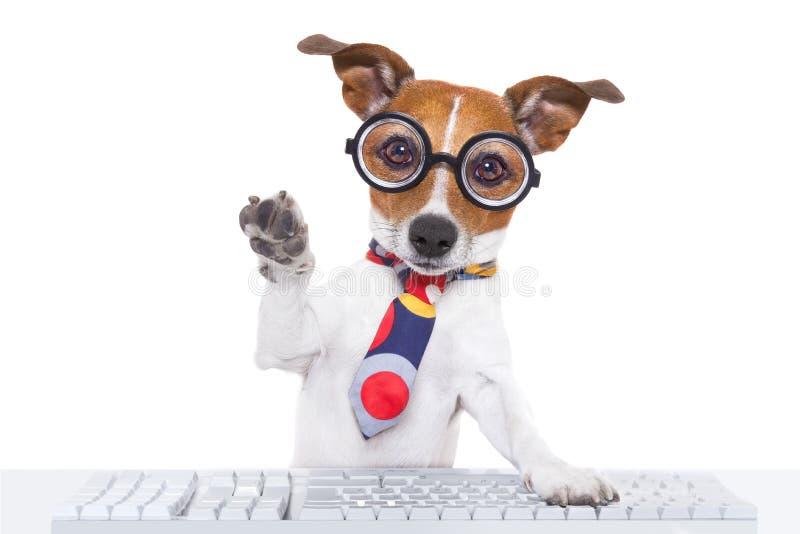 Secretary dog stock image