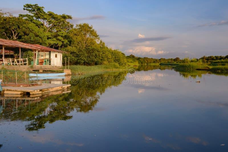 Secteur de palétuvier de Damas Island - Costa Rica image libre de droits