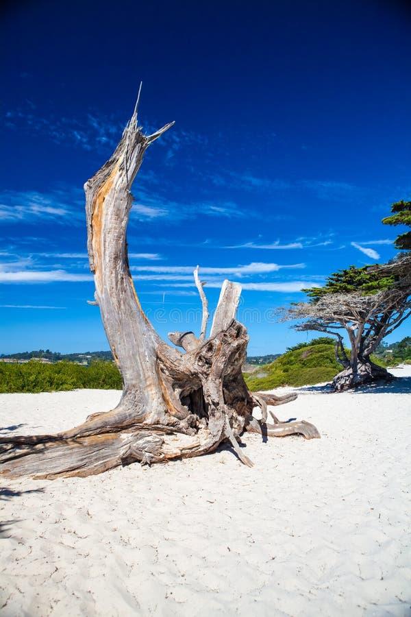 Secteur de plage de la Californie à la Carmel-par-le-mer images stock