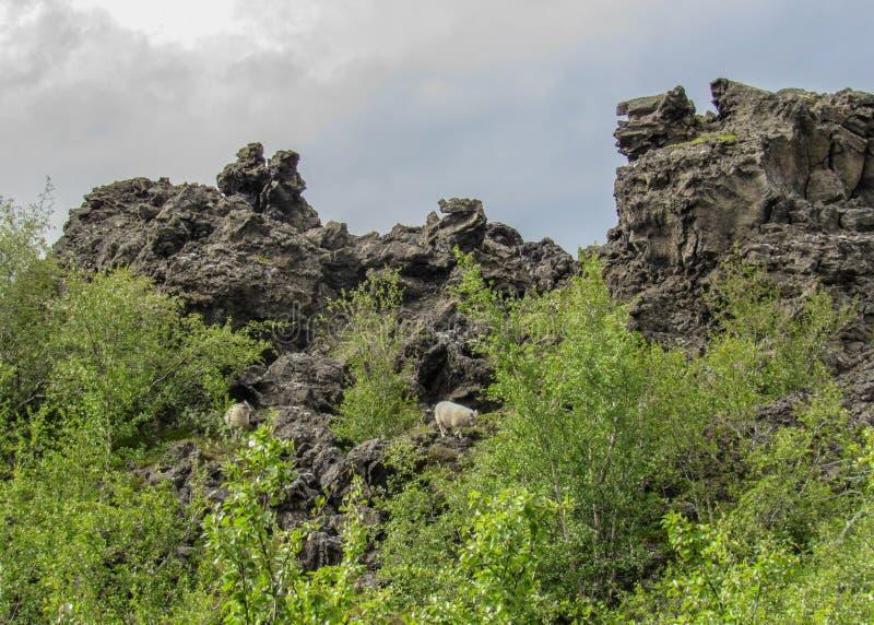 Secteur foncé de formations de roche de lave et forêt islandaise verte dans la région de Myvatn, Islande du nord, l'Europe images stock