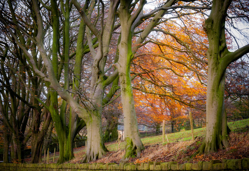 Secteur maximal Angleterre d'arbres d'automne photo stock