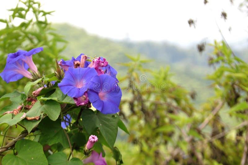 Secteurs Lumajang de colline des Wildflowers B29 photos libres de droits