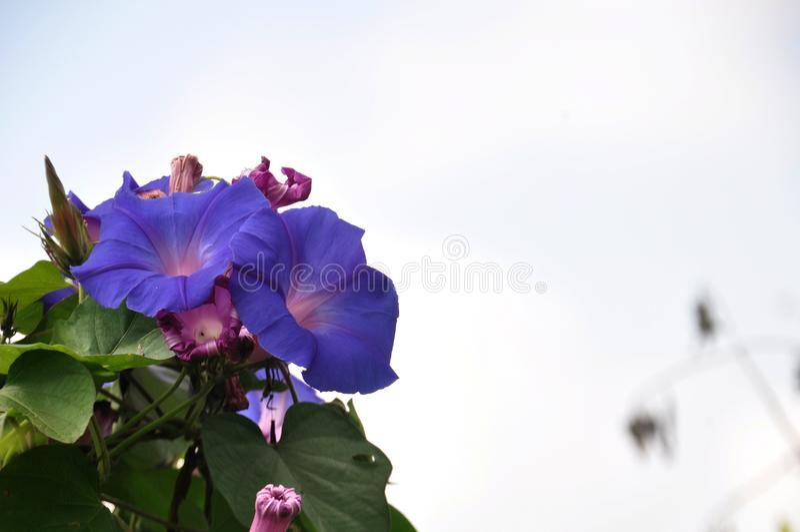 Secteurs Lumajang de colline des Wildflowers B29 photographie stock libre de droits