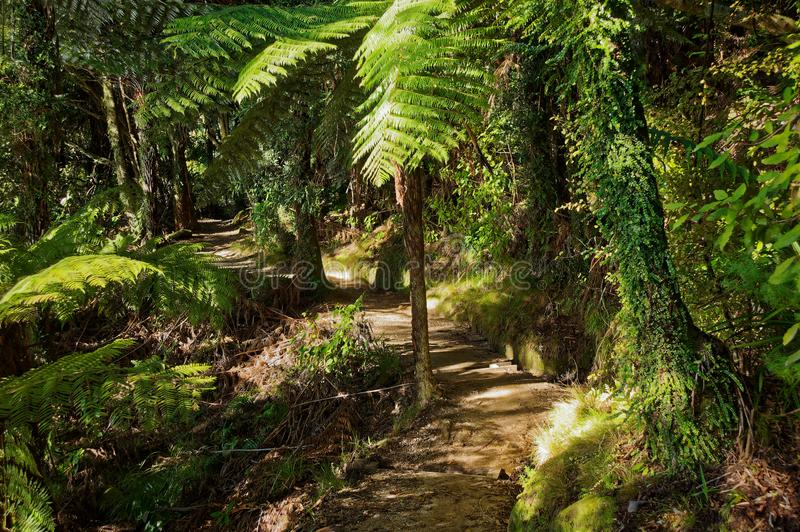 A section of the Abel Tasman Coastal Track. In New Zealand`s Abel Tasman National Park. One of New Zealand`s great walks stock photo