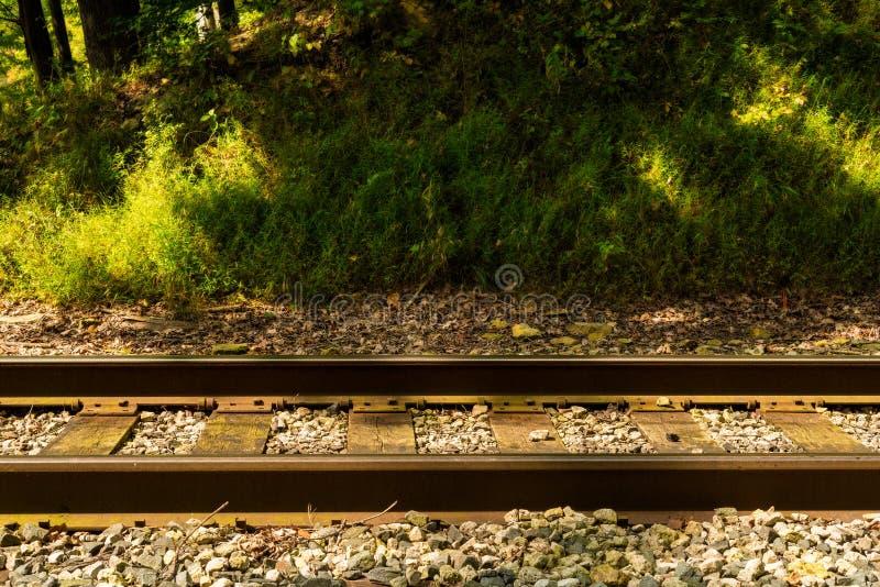 Section de chemin de fer de forêt images libres de droits
