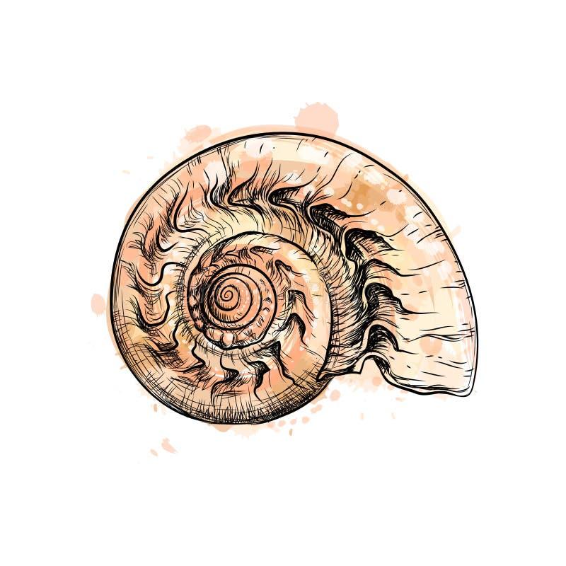 Section de coquille de Nautilus d'isolement sur le fond noir illustration libre de droits