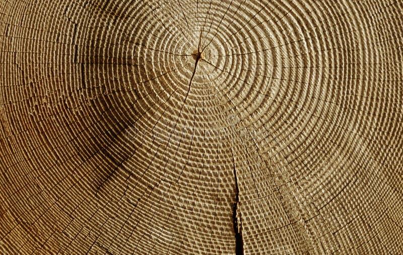 Section en bois photographie stock libre de droits