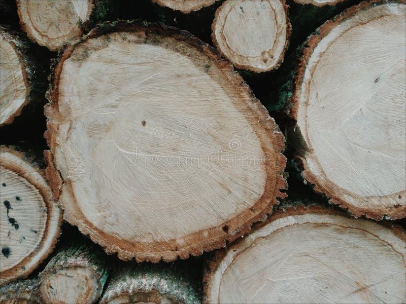 Section en bois de chêne photos stock