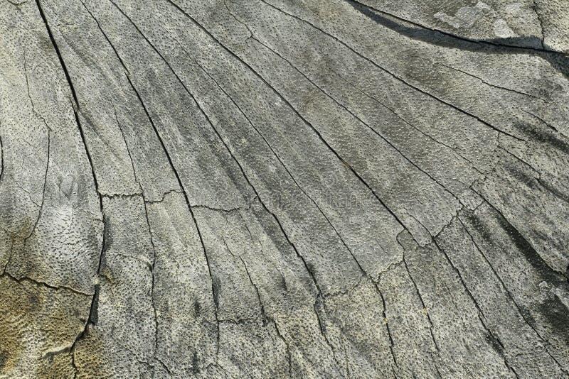 Section haute étroite de vieux tronçon d'arbre, fond en bois de texture de rondin photos stock