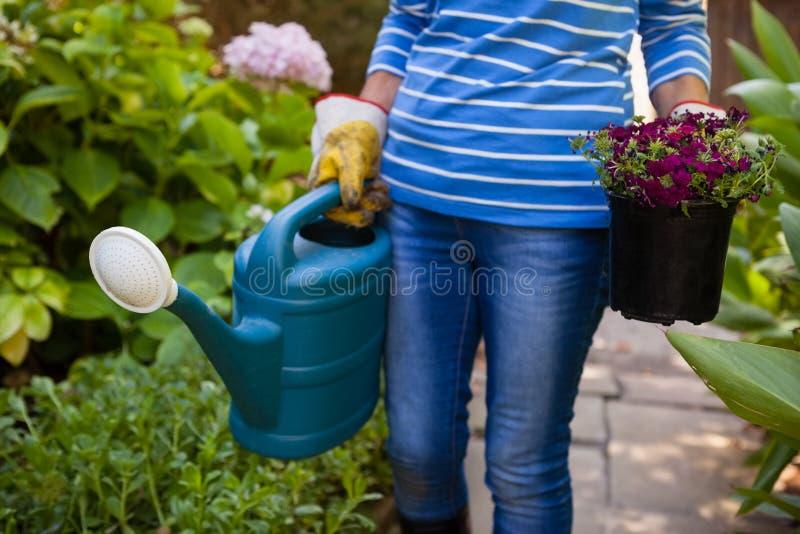 Section médiane de femme supérieure tenant la boîte d'arrosage et le pot de fleur parmi des usines photos stock