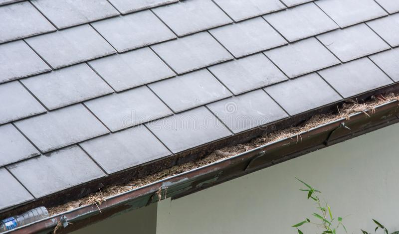 Section of rain gutter clogged with leaves, debris on residential home. Section of roof rain gutter clogged with leaves, debris on residential home stock photos