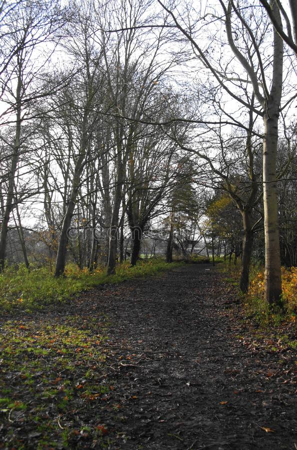 Section of Riverside Walk Through Yeovil Country Park royalty free stock photography