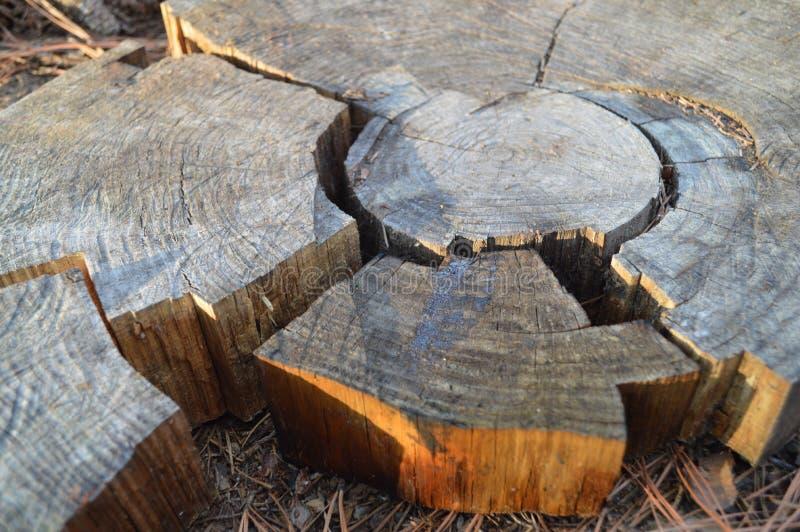 Section sèche de tronc d'arbre avec des anneaux photos stock