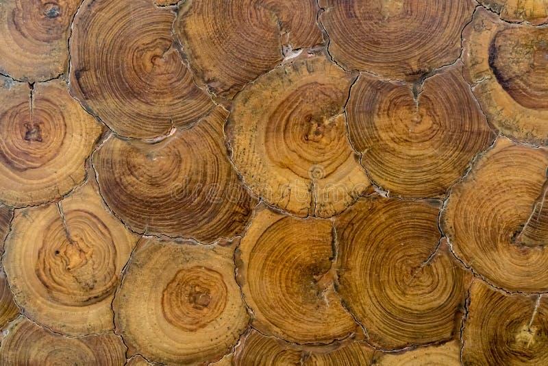 Section transversale d'arbre photos stock