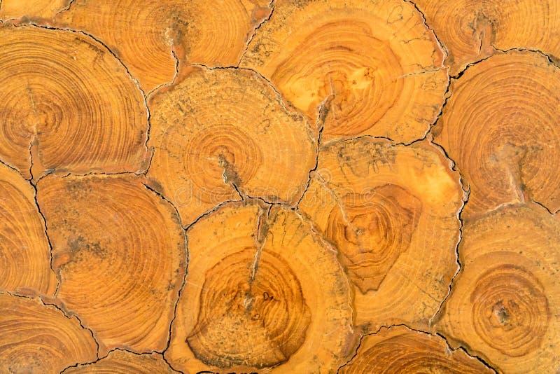 Section transversale d'arbre photographie stock