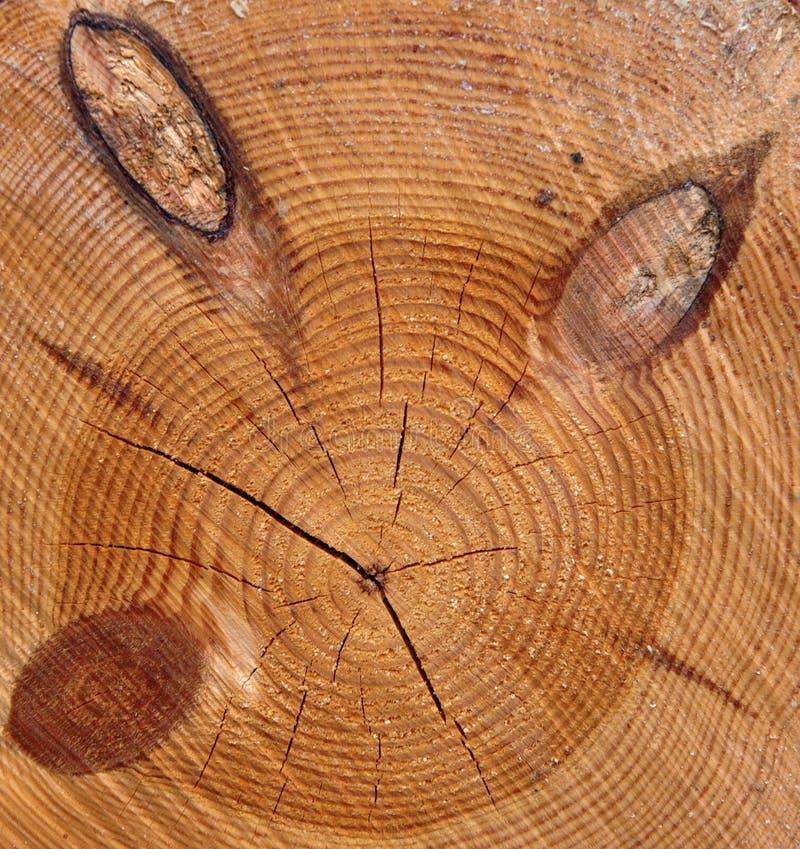 Section transversale d'arbre avec des noeuds image libre de droits