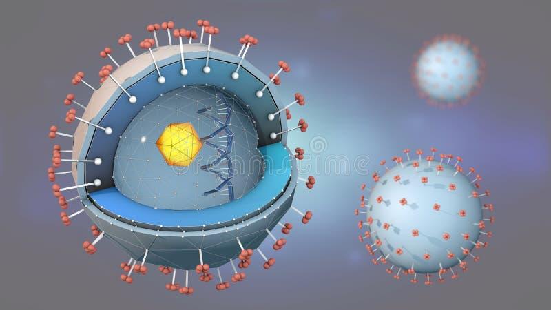 Section transversale d'un agent pathogène d'hépatite avec de l'ADN, le noyau de cellules et les récepteurs illustration stock
