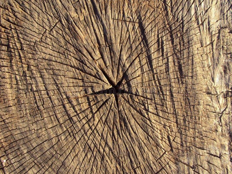 Section transversale d'un arbre photographie stock libre de droits