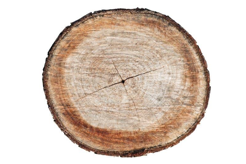 Section transversale de joncteur réseau d'arbre photographie stock libre de droits