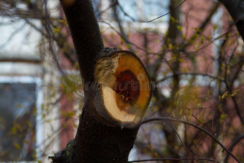 Section transversale de l'arbre photos stock